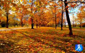 #SUNDAYFUNDAY: Run Technique in the Park @ Riverdale Park East - Running Track
